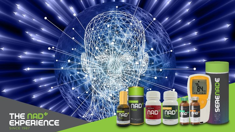 Brain NAD Is Associated With ATP Energy Production